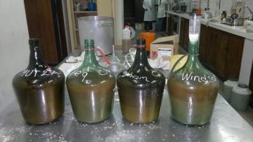 Experimentan una nueva cerveza artesanal con miel