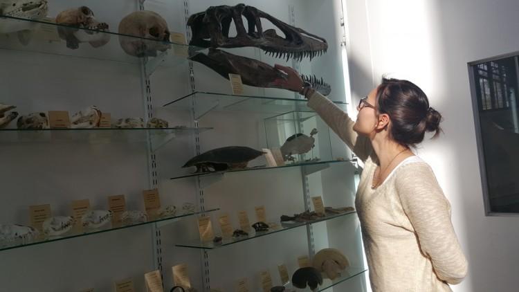 Colección de esqueletos y fósiles para visitar