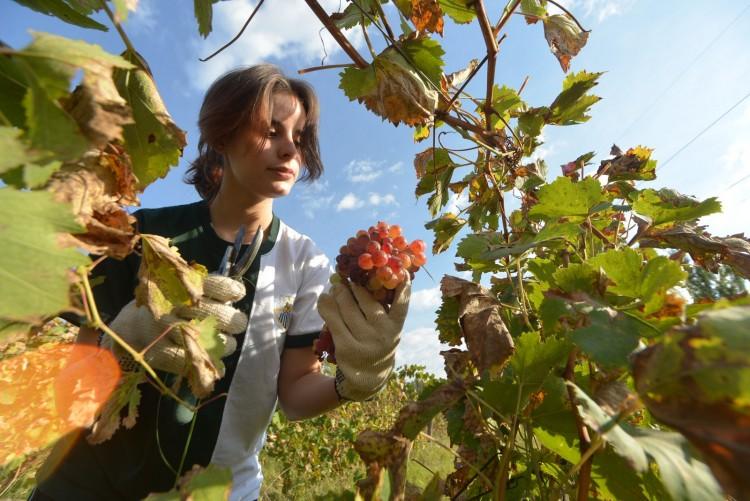 Jóvenes aprenden contenidos y valores desde la cosecha