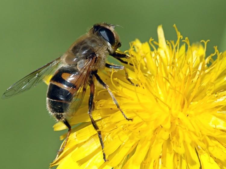 Aconsejarán sobre la importancia de la polinización con abejas