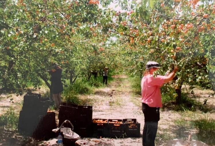 Convocan a estudiantes para realizar prácticas pre-profesionales en la organización Agrojusto
