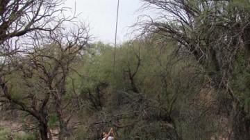 Investigan cómo conservar los bosques de algarrobo