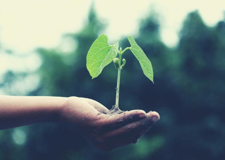 Ciencias Aplicadas a la Industria ofrece ciclo de charlas por el mes del ambiente