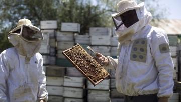 Capacitan a apicultores locales en geomática y teledetección