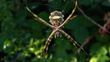 Cómo afectan la agricultura y el cambio climático a arañas e insectos