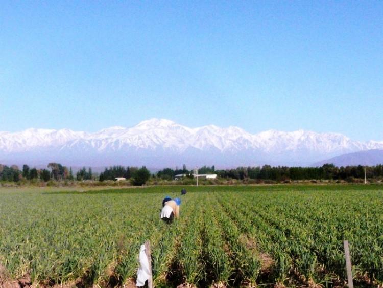 Debatirán los desafíos de la extensión rural sudamericana