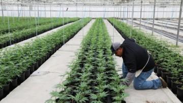 Con un debate presencial socioproductivo se cierra el ciclo de cannabis medicinal