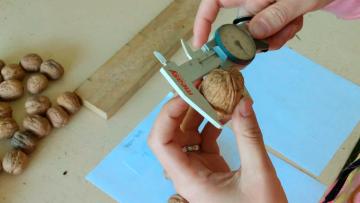 La UNCUYO desarrolló un catálogo para el sector nogalero