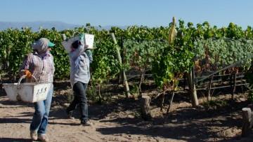 La UNCUYO conforma la mesa técnica nacional que modificará el pronóstico de cosecha
