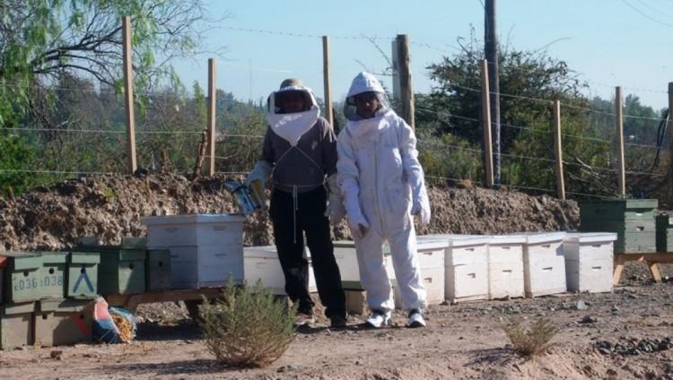 Comienza taller de apicultura en el Liceo Agrícola