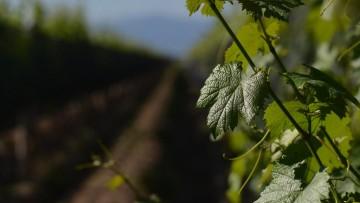 Reconocido foro vitivinícola internacional eligió a la UNCuyo como sede