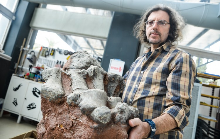 Colossosaurio, el nuevo gigante descubierto en la UNCUYO