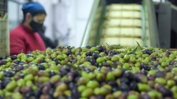 """Fábrica de la UNCUYO: """"nuevas formas de hacer"""" para que la agroindustria no se detenga"""
