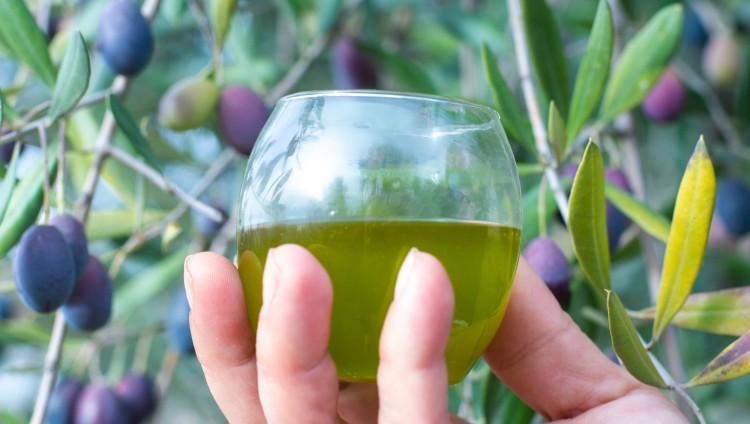 imagen que ilustra noticia Aceite de oliva mendocino: el aporte de la UNCUYO para alcanzar la Indicación Geográfica