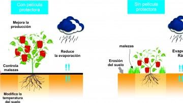 Crean películas biodegradables de almidón para proteger suelos cultivados