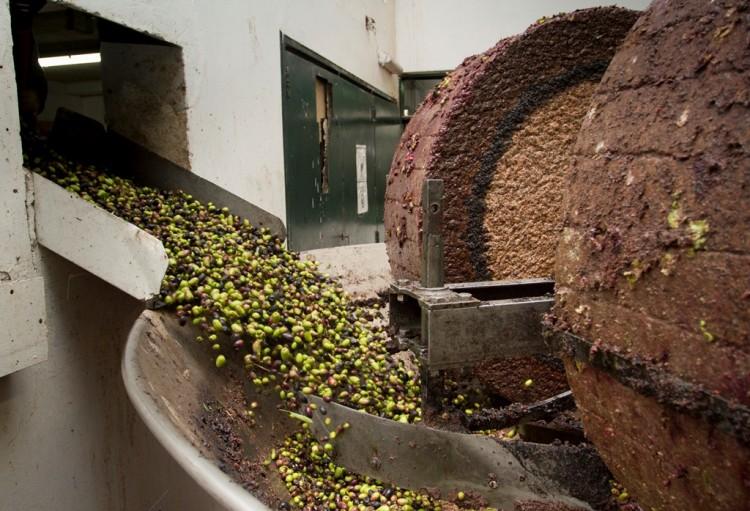 Inscriben para posgrados en olivicultura
