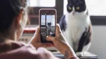 Fotografía con celular y Redes sociales: dos talleres virtuales para estudiantes