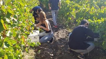 Estudiantes del Liceo Agrícola vivieron una nueva vendimia