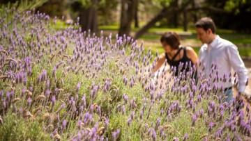 El Jardín Botánico de Agrarias es patrimonio cultural e histórico de la Universidad