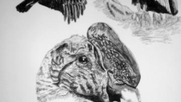 Exposición de dibujos de aves en el Espacio de la Ciencia y la Tecnología