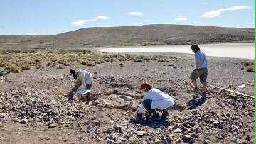 Equipo del Conicet descubrió colonia reproductiva en una especie primitiva de dinosaurio