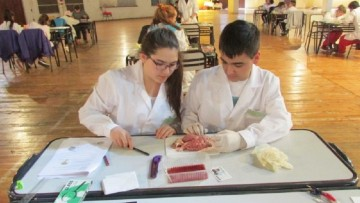 De manera virtual comienza la Olimpíada Argentina de Ciencias Junior