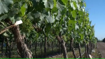 Inscriben para presentar trabajos sobre la economía y el negocio vitivinícola