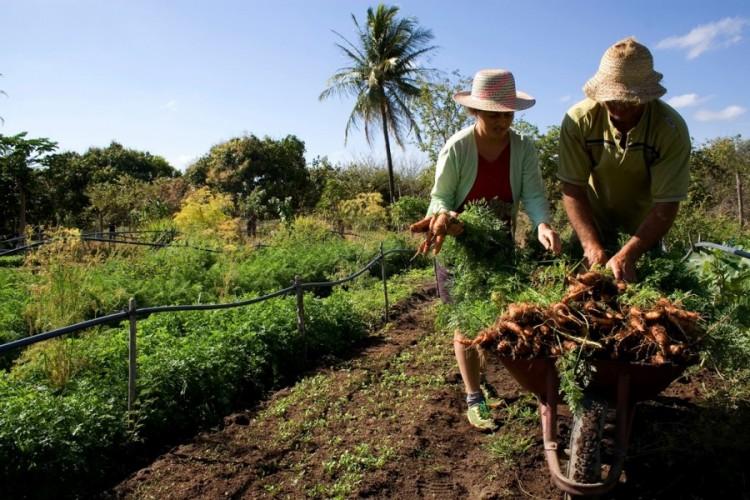 Ofrecen ciclo de capacitación en ventas y comercialización para productores rurales