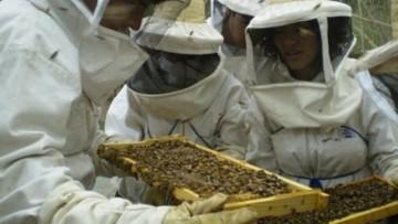 Cooperativa apícola de Tunuyán presentará trabajo realizado con apoyo de la UNCuyo