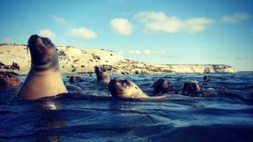 Ocho días para conocer Puerto Madryn