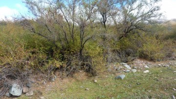 La UNCUYO restaurará especies nativas en Alta Montaña y el Sur provincial