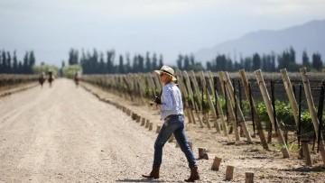 Turismo post COVID-19: perspectivas para el Valle de Uco, Zona Este y el Secano